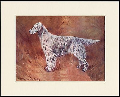 English Setter Old Named Champion Dog Lovely Print Mounted Ready To Frame