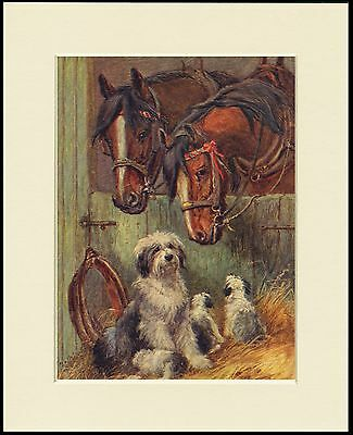 Old English Sheepdog Pups And Shire Horses Dog Print Mounted Ready To Frame