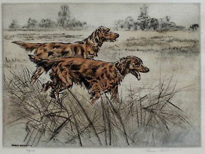 IRISH RED SETTER DOG LIMITED EDITION ENGRAVING PRINT by the Late Henry Wilkinson