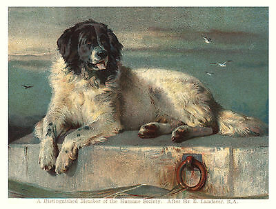 Newfoundland Distinguished Member Dog On A Dock Lovely  Greetings Note Card