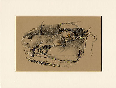 Sleeping Chow Chow On Settee Lovely 1930'S Cecil Aldin Dog Print Ready Mounted