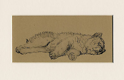 Sleeping Chow Chow Puppy Lovely 1930'S Cecil Aldin Dog Art Print Ready Mounted