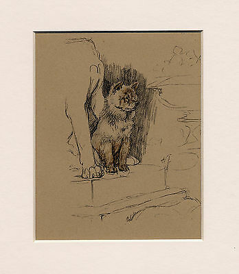 Chow Chow Charming 1930's Cecil Aldin Dog Art Print Ready Mounted