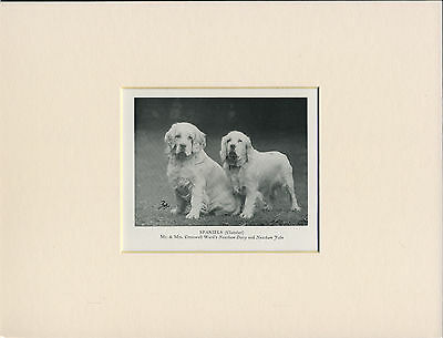 Clumber Spaniel Two Named Dogs Old 1950's Dog Print Mounted Ready To Frame