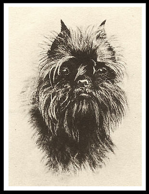 Affenpinscher Head Study Lovely Vintage Style Dog Print Poster