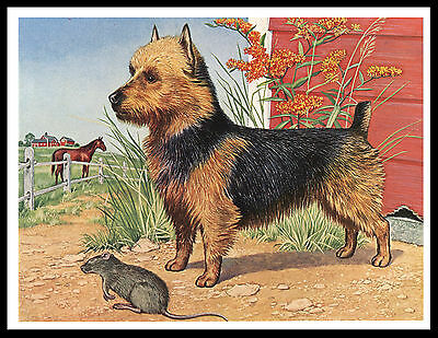 Australian Terrier And Rat Lovely Vintage Style Dog Print Poster