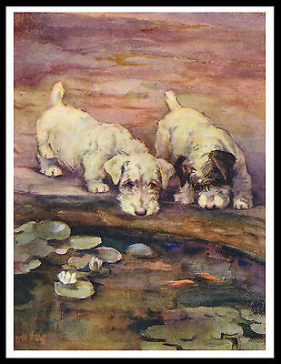 Sealyham Terrier Two Dogs By A Pond Lovely Vintage Style Dog Print Poster