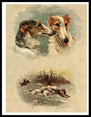 Borzoi Head Study And Hunting Scene Lovely Vintage Style Dog Print Poster