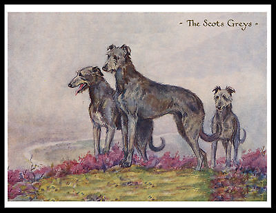Scottish Deerhound Dogs The Scots Greys Lovely Vintage Style Dog Print Poster