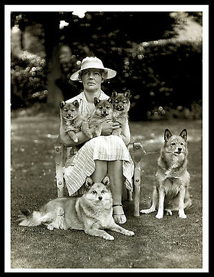 Finnish Spitz Lady And Her Dogs Lovely Vintage Style Dog Print Poster