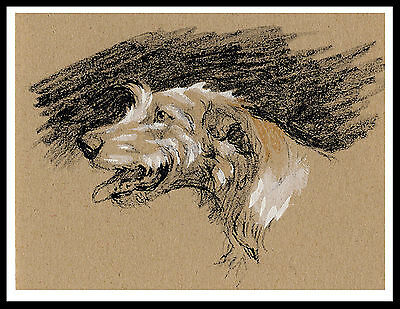 Irish Wolfhound Head Study Lovely Vintage Style Dog Print Poster