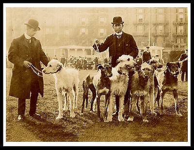 Irish Wolfhound Men And Dogs At Show Great Vintage Style Image Dog Print Poster