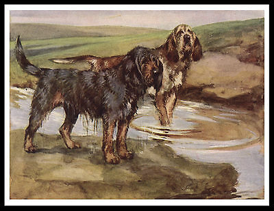 Otterhound Dogs Great Image Vintage Style Dog Print Poster