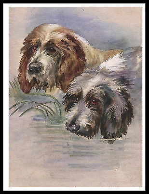 Otterhound Dogs Head Study Great Image Vintage Style Dog Print Poster