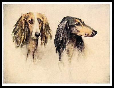 Saluki Two Dogs Head Study Lovely Vintage Style Dog Print Poster