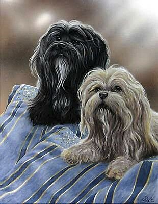 LHASA APSO TIBETAN DOG FINE ART LIMITED EDITION PRINT - by Paul Doyle