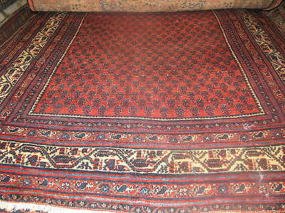 Antique Persian Angelas HandKnotted Rug  Wool 4' x 6'-8