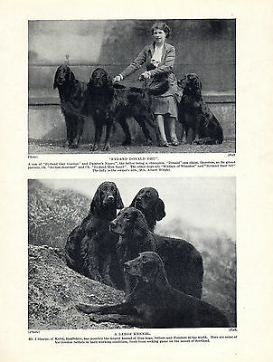 Gordon Setter Lady And Named Dogs Old Original Dog Print From 1934