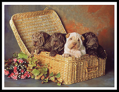 Shar Pei Puppies Lovely Dog Print Poster