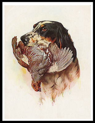 English Setter Head Study Dog And Bird Lovely Vintage Style Dog Print Poster