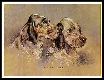 English Setter Two Dogs Head Study Lovely Vintage Style Dog Print Poster