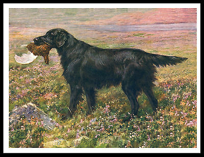 Flat Coated Retriever And Grouse Great Vintage Style Dog Print Poster