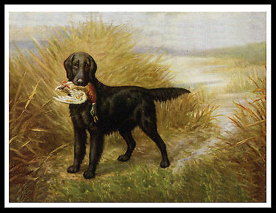 Flat Coated Retriever Dog And Duck Great Vintage Style Dog Print Poster