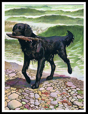 Flat Coated Retriever Dog Fetches Stick From Sea  Vintage Style Print Poster
