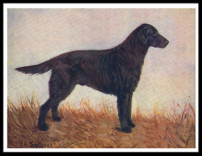 Flat Coated Retriever Old Style Champion Dog Vintage Style Dog Print Poster