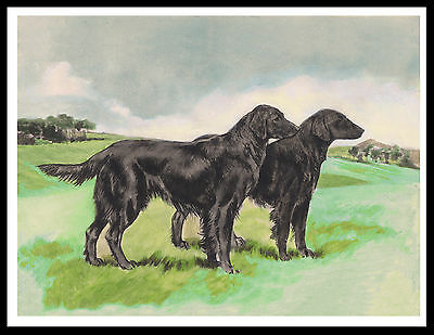 Flat Coated Retriever Two Dogs Lovely Vintage Style Dog Print Poster