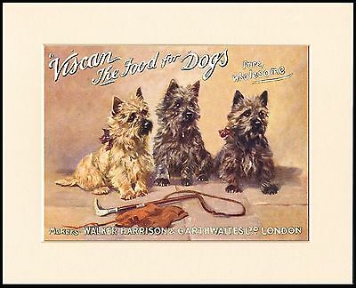 Cairn Terrier Dogs Dog Food Advert Lovely Mounted Dog Print Ready To Frame