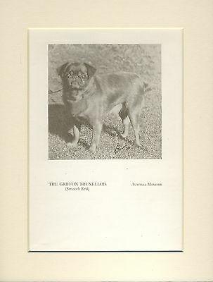 Brussels Griffon Old 1934 Named Dog Print Mounted Ready To Frame