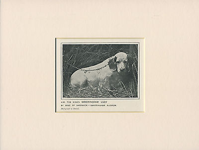 Clumber Spaniel Old Antique 1912 Little Named Dog Print Mounted Ready To Frame
