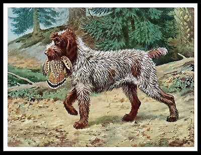 German Wirehaired Pointing Griffon And Bird Great Vintage Style Dog Print Poster
