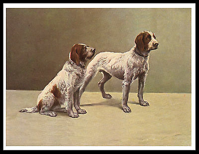 German Wirehaired Pointer Dogs Great Vintage Style Dog Print Poster