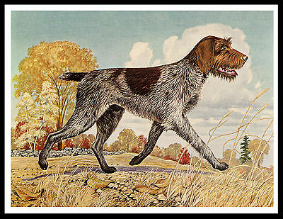 German Wirehaired Pointer Great Vintage Style Dog Print Poster