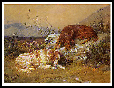 Irish And Red And White Setter Dogs Lovely Vintage Style Dog Print Poster