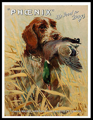 German Wirehaired Pointer Great Vintage Style Dog Food Advert Print Poster