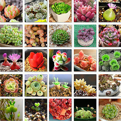 60pcs/Pack Succulent Seeds Mini Potted Flower Seeds Anti-radiation 15 Styles