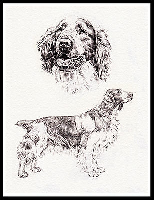 Welsh Springer Spaniel Great Vintage Style Dog Sketch Print Poster