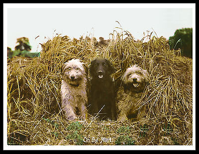 Bearded Collie And Flat Coated Retriever Dogs Vintage Style Dog Print Poster