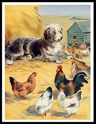 Bearded Collie And Hens Charming Vintage Style Dog Print Poster