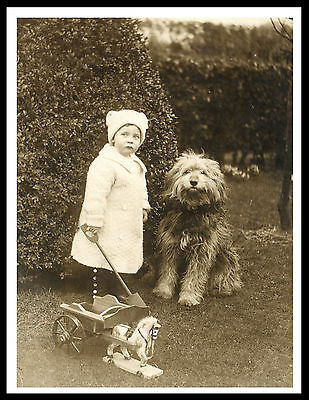 Bearded Collie Little Girl And Old Type Dog Great Vintage Style Dog Print Poster