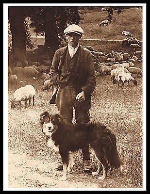 Border Collie Shepherd And His Dog Great Vintage Style Dog Photo Print Poster