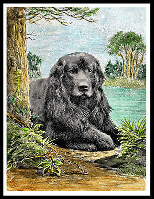Newfoundland Dog Lying By Water Great Vintage Style Dog Print Poster