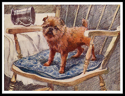 Brussels Griffon  Little In A Chair Charming Vintage Style Dog Art Print Poster