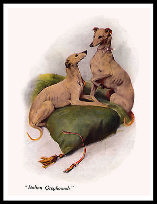 Italian Greyhound Two Dogs Lovely Vintage Style Dog Print Poster