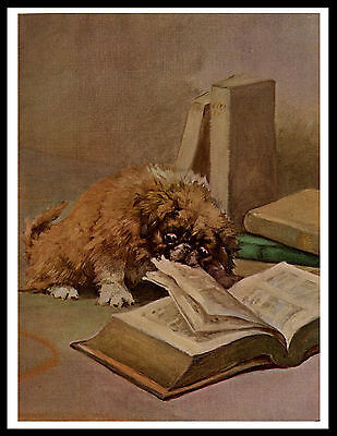 Pekingese Puppy Tears Book Lovely Vintage Style Dog Print Poster