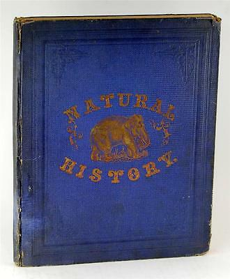 1859 Illustrated Book Of Natural History Henry Ashmead 32 Color Wood Engravings