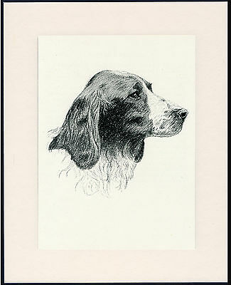 Welsh Springer Spaniel Old Dog Head Study Print From 1935 Mounted Ready To Frame